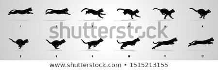 cartoon cat running race stock photo © cthoman