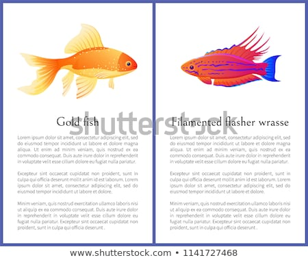 gold fish and flasher posters vector illustration stock photo © robuart