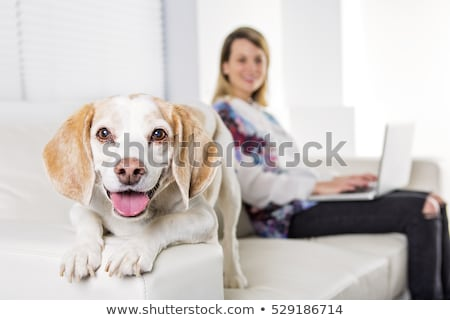 Beautiful young blonde woman with her dog at home Stock photo © Lopolo
