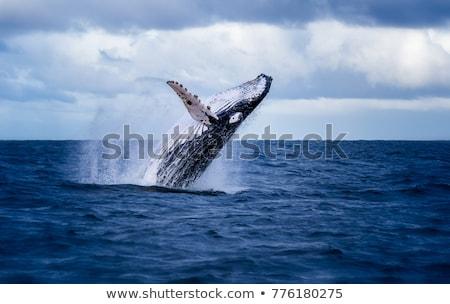 кит иллюстрация набор природы морем синий Сток-фото © colematt