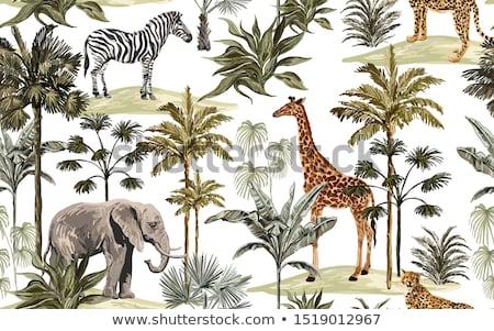 Zürafa baskı hayvan sanat Stok fotoğraf © cienpies