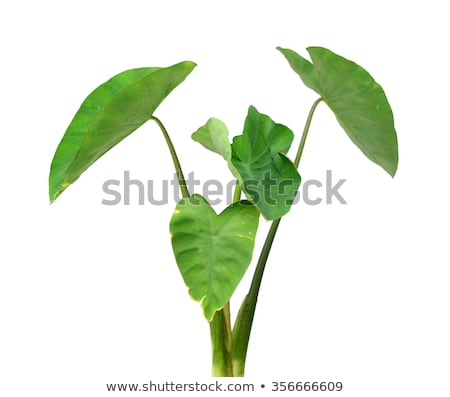 Big green tree and close plant cells Stock photo © bluering