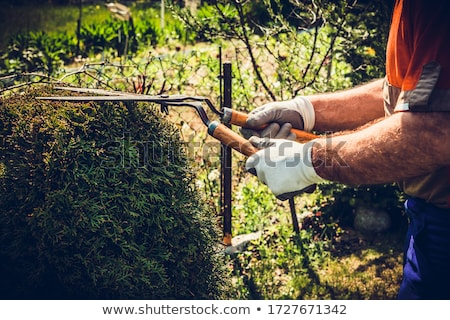 Man hands cuts branches of bushes with hand pruning scissors. Stock photo © Illia