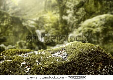 Musgo pedras tabela topo ver verde Foto stock © dashapetrenko