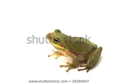 Dalgın kurbağa poz resim Stok fotoğraf © saje