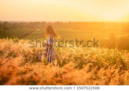 Autumn Sunshine Stock photo © ca2hill