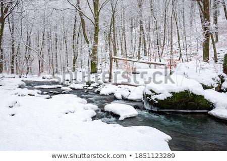 Winter park stream in snow stock photo © michey