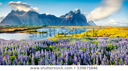 panorama of summer landscape with sea and mountain range stock photo © maxpro