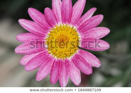 azul · vermelho · flores · primavera · natureza - foto stock © compuinfoto