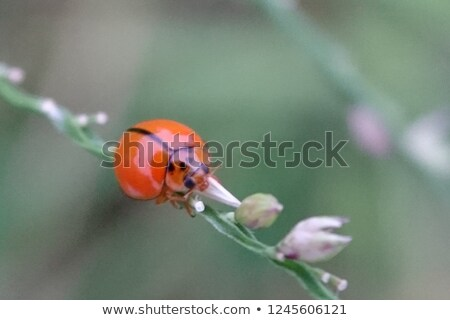 Green Sitting Bug Stock photo © derocz