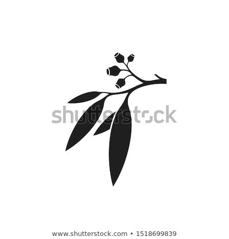 камедь листьев Sunshine Новая Зеландия Сток-фото © Undy