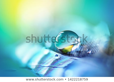 feather with water drops Stock photo © kokimk