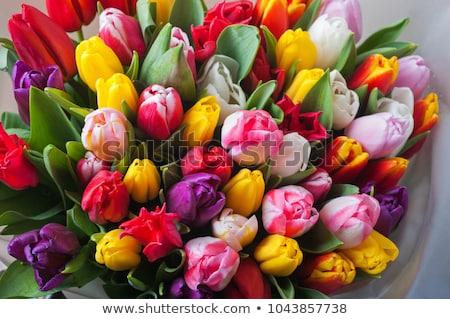 Tulipes bouquet rouge jaune bois sombre Photo stock © Tagore75