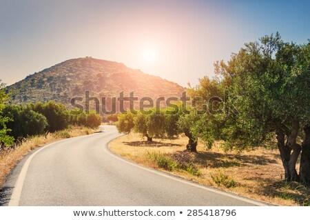 Olajbogyó fák út liget vidék Görögország Stock fotó © Mps197