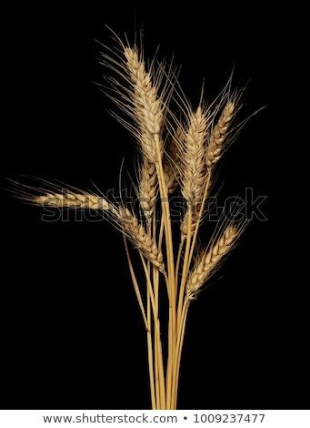 Сток-фото: пшеницы · ушки · изолированный · черный · соломы · копия · пространства