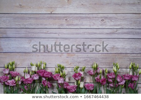 beautiful rose on wooden background stock photo © inxti