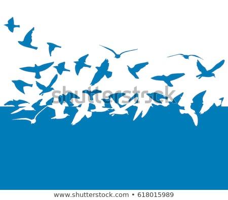 group of vector blue birds stock photo © balabolka