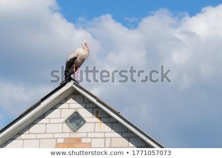 Storch Fuß Dach Himmel Natur Vogel Stock foto © mariephoto