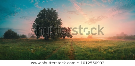 nature landscape with plants on summer sunset stock photo © cienpies