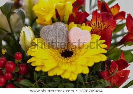 keverék · szívek · növények · itt · kicsi · gyűjtemény - stock fotó © theblueplanet