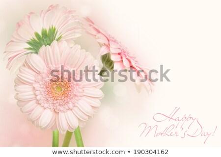Anneler gün kart pembe leke çiçekler Stok fotoğraf © adamson