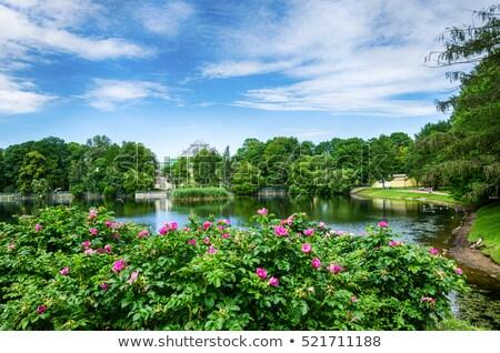 Virág bokor előtér jelenet illusztráció természet Stock fotó © bluering