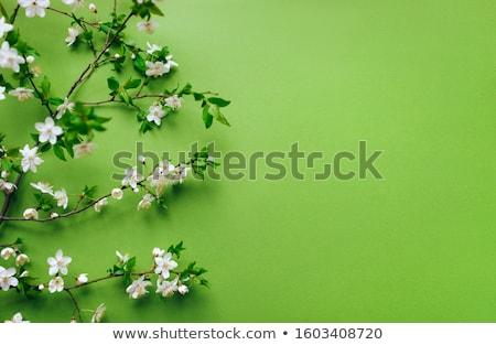 Belle printemps fleurs blanches vert layout Photo stock © Burchenko