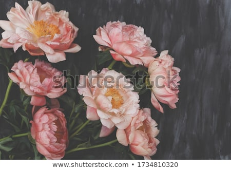 Pink peony flowers as floral art background, botanical flatlay and luxury branding Stock photo © Anneleven