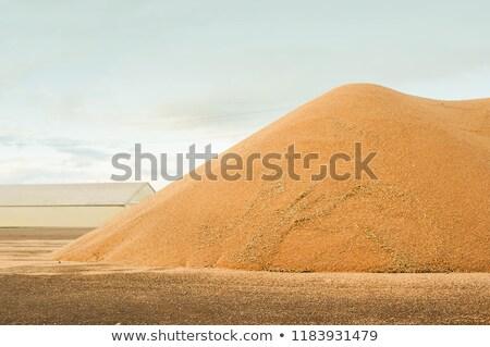 Pile of paddy Stock photo © stoonn