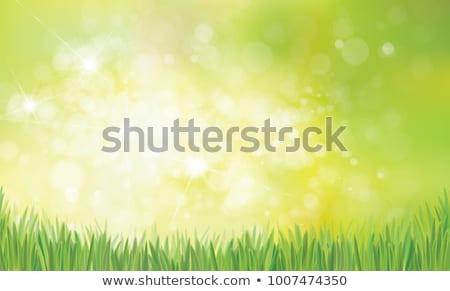 Foto stock: Erva · daninha · verde · natureza · milagre · jardim · céu