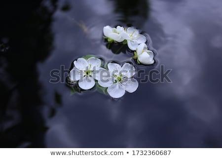 水 · 白 · スイミングプール · 花 · 背景 - ストックフォト © pakhnyushchyy