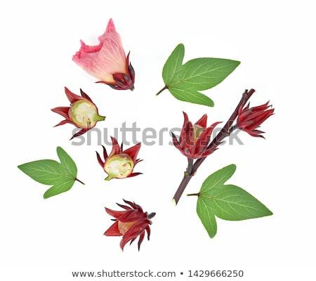 ebegümeci · meyve · çiçek · yaprakları · çay · bitki - stok fotoğraf © witthaya