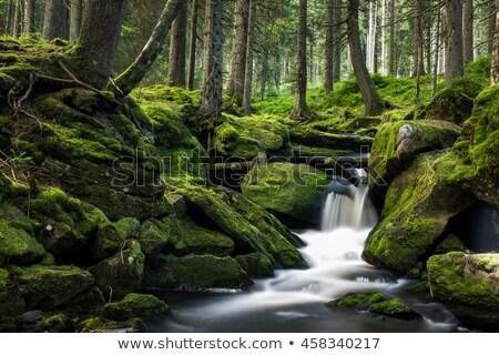 Klein rivier bos groen gras voorjaar gras Stockfoto © ultrapro