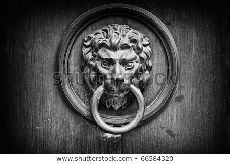 Locked white lion Stock photo © badmanproduction