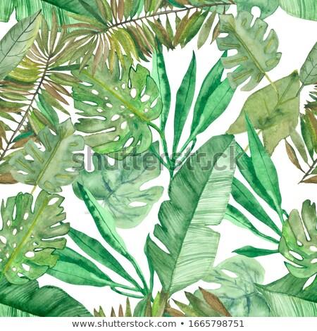 Stockfoto: Tropische · natuur · vierkante · abstract · licht · groene