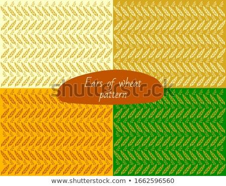 Rice field pattern Stock photo © smithore