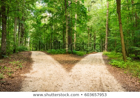 a turn of rural road is to the right Stock photo © mycola