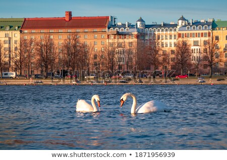 European pond with white swans. Stock photo © justinb