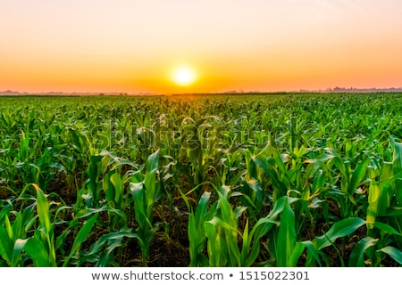 Blue sky, green grass and industrial area Stock photo © cherezoff