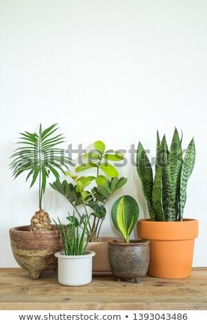 üvegház növény fehér levél háttér zöld Stock fotó © bluering