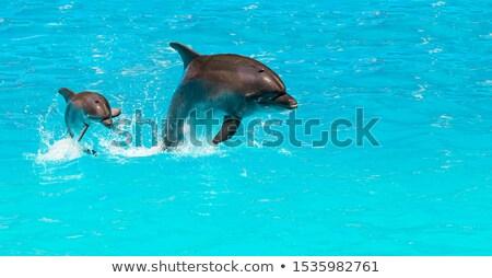 Dolfijnen liefde oceaan illustratie water zee Stockfoto © adrenalina