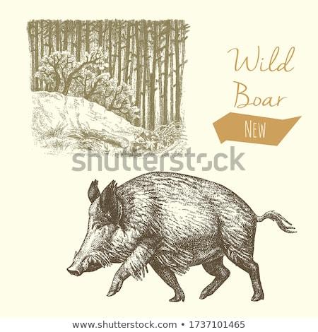 Foto stock: Javali · floresta · retrato · madeira · inverno