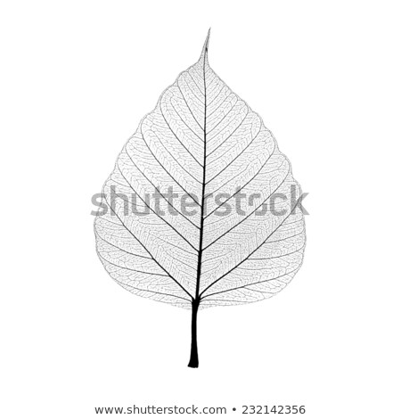 Green leaf with veined pattern isolated on a black background with copy space. Flat lay Stock photo © artjazz