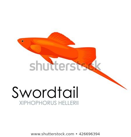 カラフル 魚 孤立した 白 グラフィック 男性 ストックフォト © robuart