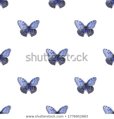 Blue and white butterflies Stock photo © blackmoon979