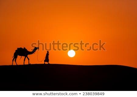 Camelo pôr do sol arenoso deserto caravana palmeira Foto stock © liolle