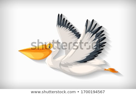 Background template with plain color and pelican flying Stock photo © bluering