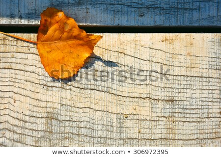 dry fallen autumn leaves in shape of heart Stock photo © dolgachov