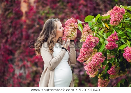 A pregnant young woman standing at the red autumn hedge, smelling a flower hydrangea. pregnant woman Stock photo © galitskaya