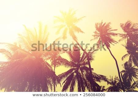 Mooie bomen zuidelijk klimaat zomer natuur Stockfoto © Anneleven